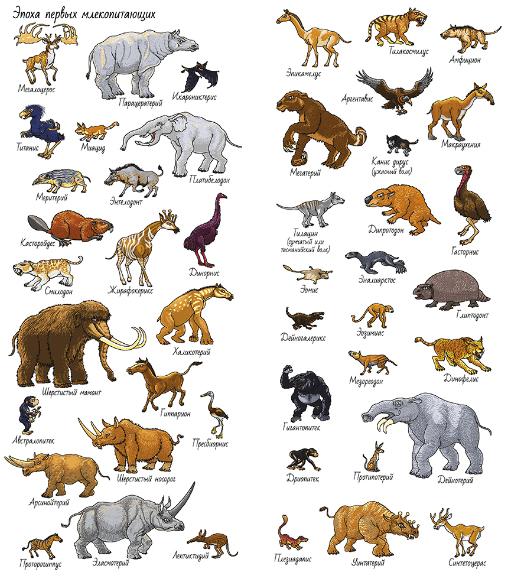 """Найди и покажи. """"Динозавры"""""""