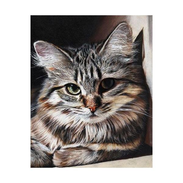 """Картина по номерам """"Красивый кот"""", GX27396"""